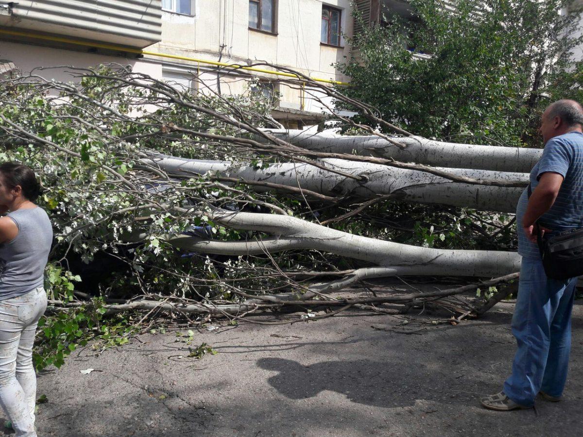 дерево упало на машину в севастополе 19.09.2016