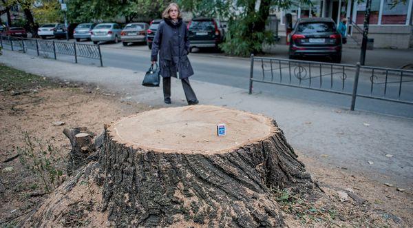 спил деревьев в симферополе