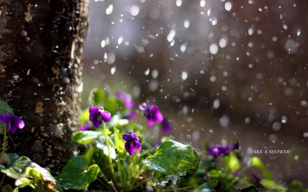 дожди цветущие деревья