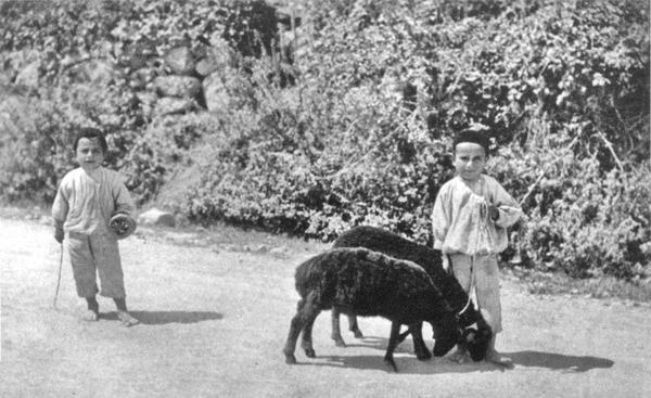 Фотография Василия Сокорнова. Маленькие чабаны, 1912 год.