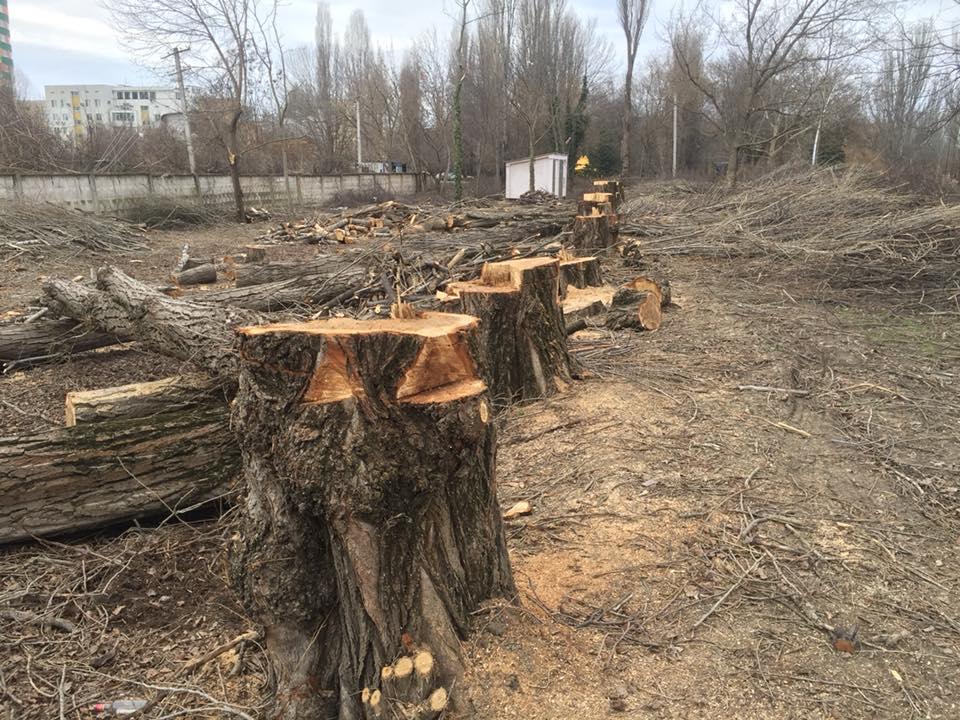 деревья в гагаринском парке