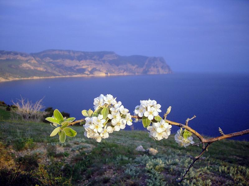 весна в крыму когда начинается могут появиться любой