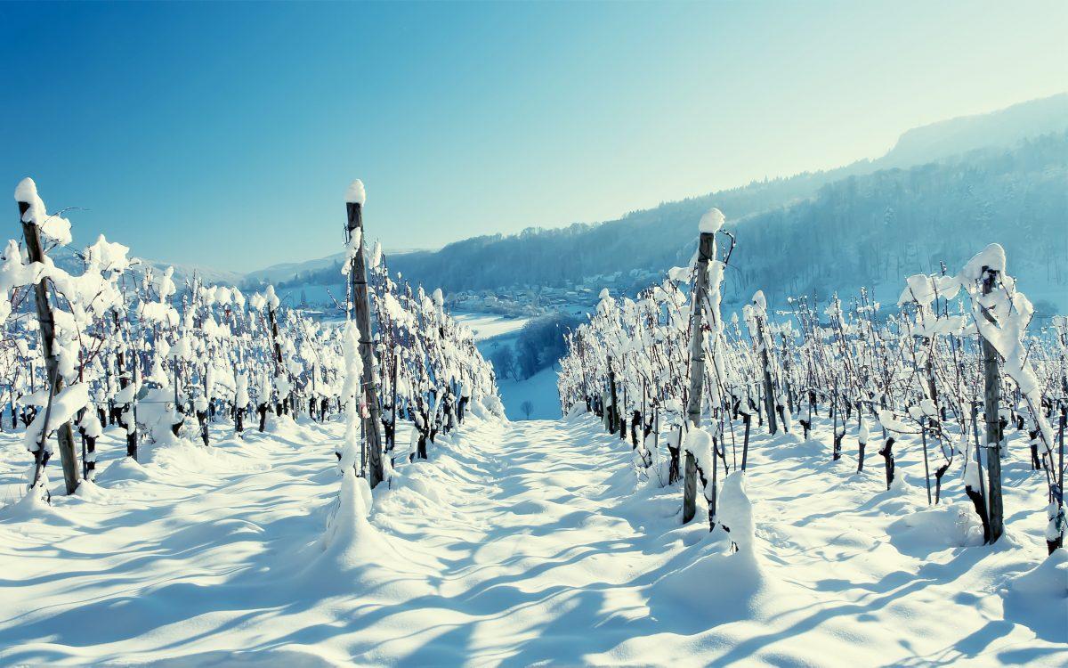 Синоптики обещают вСевастополе семиградусный мороз иснег