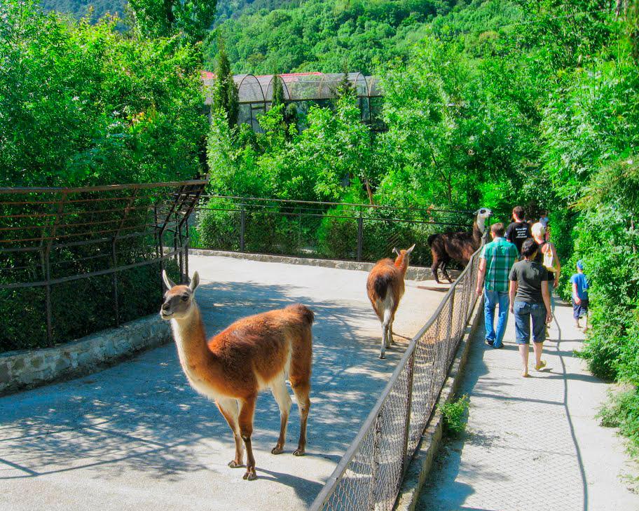 «Сказка» завершилась: русская власть закрыла зоопарк вЯлте