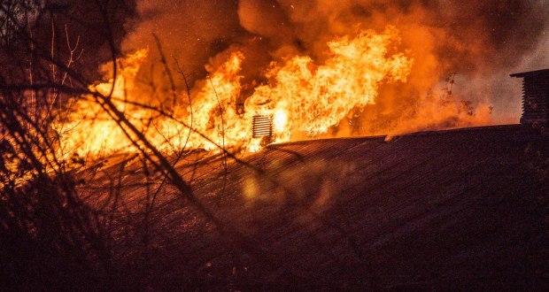 птицефабрика южная пожар