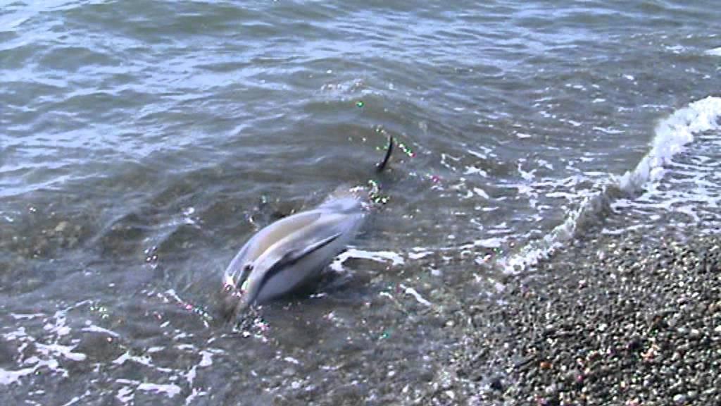 delfina-afalin